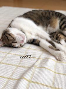 大好きな猫の豆知識